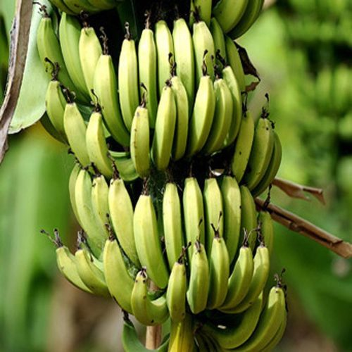 Banana-Flour