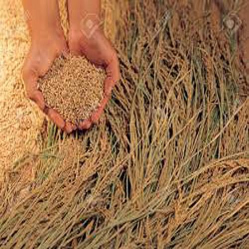 Brown Rice Flour Organic